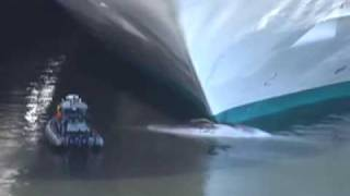 Whale impaled by cruise ship