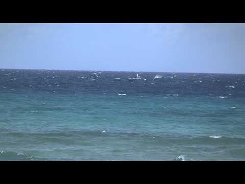 Humpback Whales breeching in front of Maui Sands Resort