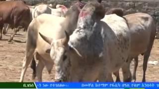 ETHIOPIA : The Latest EBC Business News - April 15, 2017