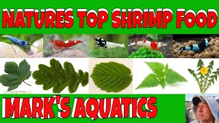 MOTHER NATURES SHRIMP FOODS AND HIDES.