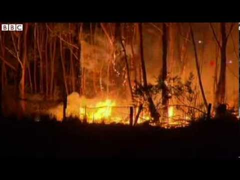 Australia Wildfires  State of Emergency Declared