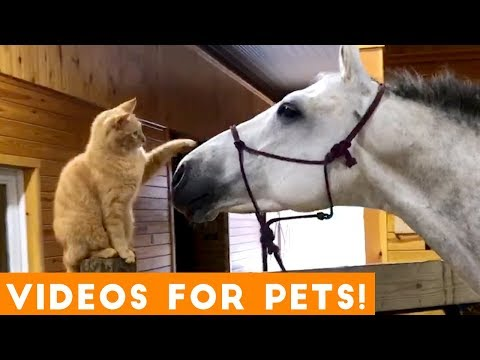 Funniest Videos for Pets to Watch Compilation | Funny Pet Videos