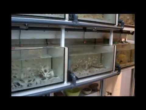 Zierfische videolike for Zierfisch shop