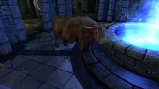 The Adventures of CatDog in Skyrim, ep21 - ƒel Plays!