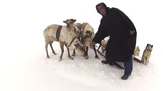 Yamal Deers and their Masters