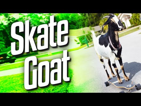 Skate Goat (goat Simulator Part 1) video