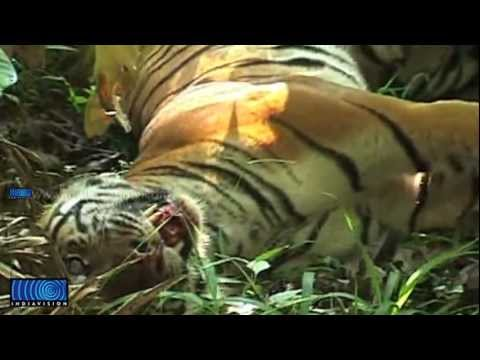 Ministry of Environment & Forests urges action against tiger shooters in Wayanadu