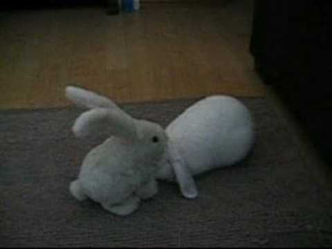 rabbit massage. rabbit massage. pet rabbit meets toy rabbit for mutual ...