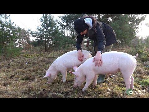 Schmuserunde bei den Schweinen Anni & Rosalie