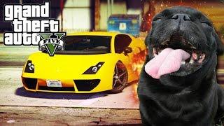 GTA V - Random Moments 18 (Animal Theft Auto!)