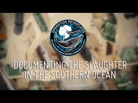 Documenting the Slaughter in the Southern Ocean