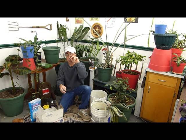 Dangers of Organic Gardening