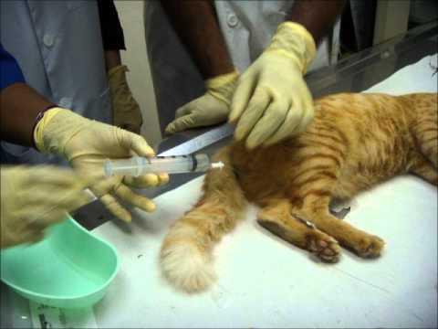 Как помочь коту с мочекаменной болезнью в домашних условиях 864