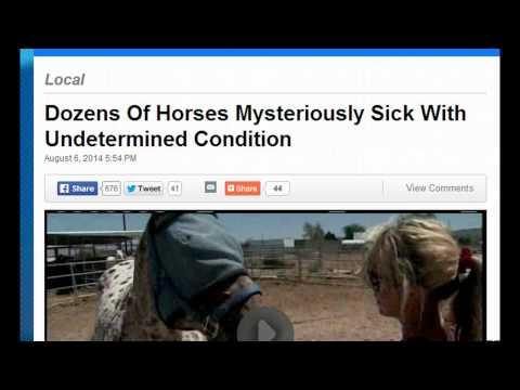 Horses Skin Melt Off In California...Fukushima? Are We Next?