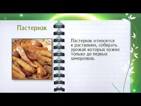 Кулинарная энциклопедия - Пастернак
