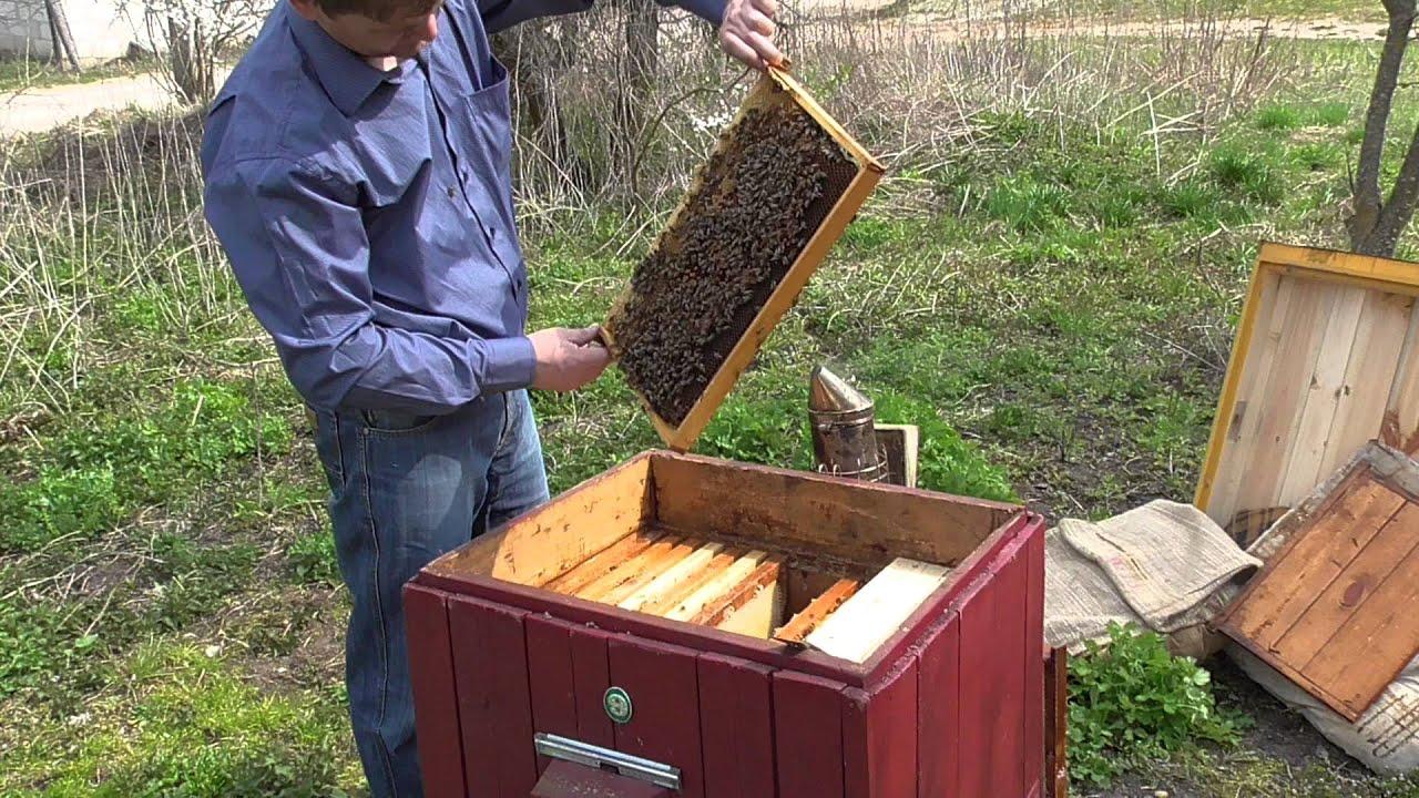 Как сделать отводок пчел в мае