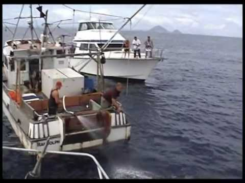 Largest skip jack tuna fishing haul ever - 35 fish in 4.5 minutes