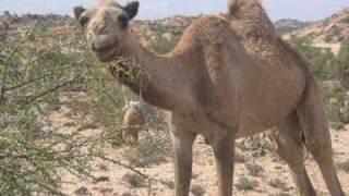 Suldaan Timacade (Somalia)