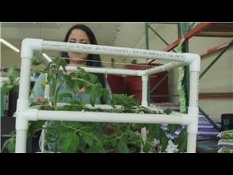 Tomatoes And Indoor Vegetable Gardens How Do I Grow