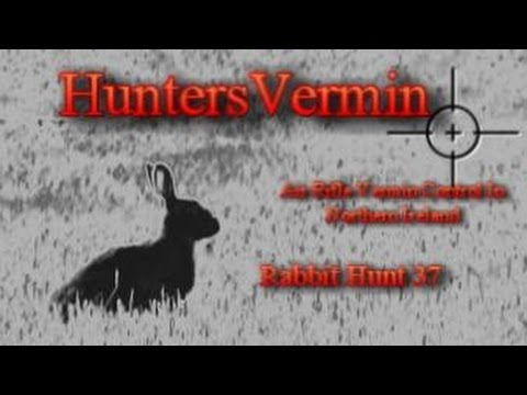 Air Rifle Hunting. Rabbit Hunt 37. AUG 2013