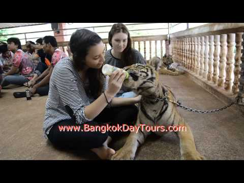 Tiger Temple Breakfast with Monks via Bangkok Day Tours