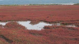 湖畔に深紅のじゅうたん