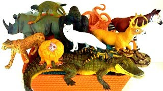 Learn Wild Animals Names 🐆 Zoo animals 🐊  Kids Educational Toys