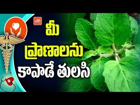 Benefits Of Eating Basil Leaves | Uses of Basil Leaves | Telugu Health Tips | YOYO TV Health
