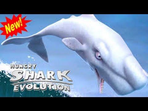 кит убийца против белой акулы