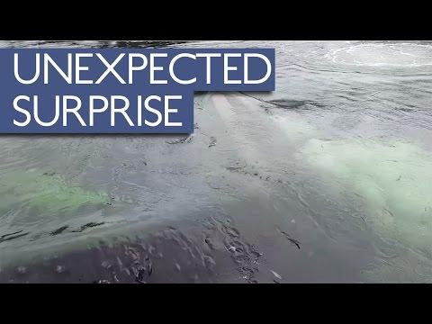 Unexpected Surprise For Alaskan Fisherman