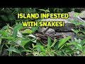 """Sail To The Middle of Lake Ontario.  """"Snake Island"""".  If you don't like snakes, DON'T COME HERE!"""