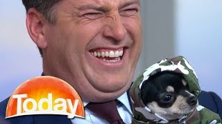 Karl thinks Chihuahua is battery powered | TODAY Show Australia