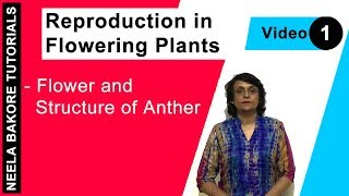 Reproduction in Flowering Plants - Flower and Structure of Anther