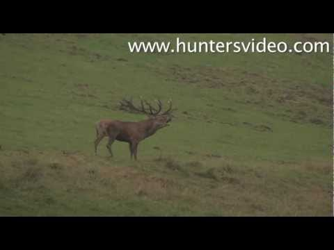 hunting-at-berleburg-hunters-video.html