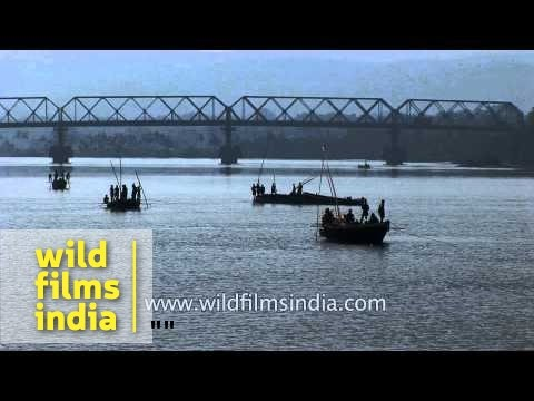 Sand mining on Mandovi river beds and banks - Goa