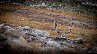 Colorado Public DIY Mule Deer Bow Hunt