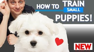 How to Train Your Dog to NOT PULL on the Leash!