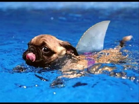 Funny Dogs Playing in Water - best dog swimming compilation 2016