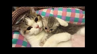 Funny Cats ► Mother Cat and Cute Kittens - Best Family Cats 😻 Compilation ► Most Popular