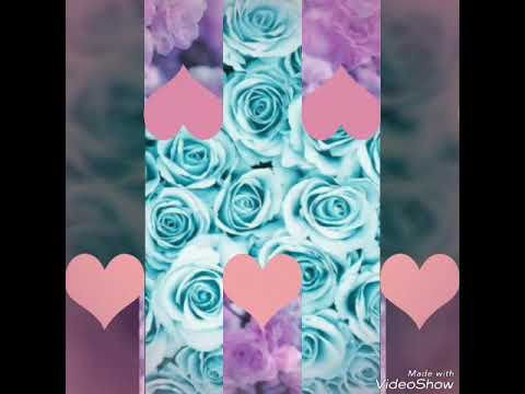 Картинки цветов скачать на телефон