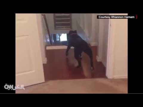 كلب يهزم مرضه النفسي بدخول الأبواب عكسيا