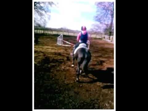 Horse Riding (my Horse Alfie) Xxx  (created With Magisto) video