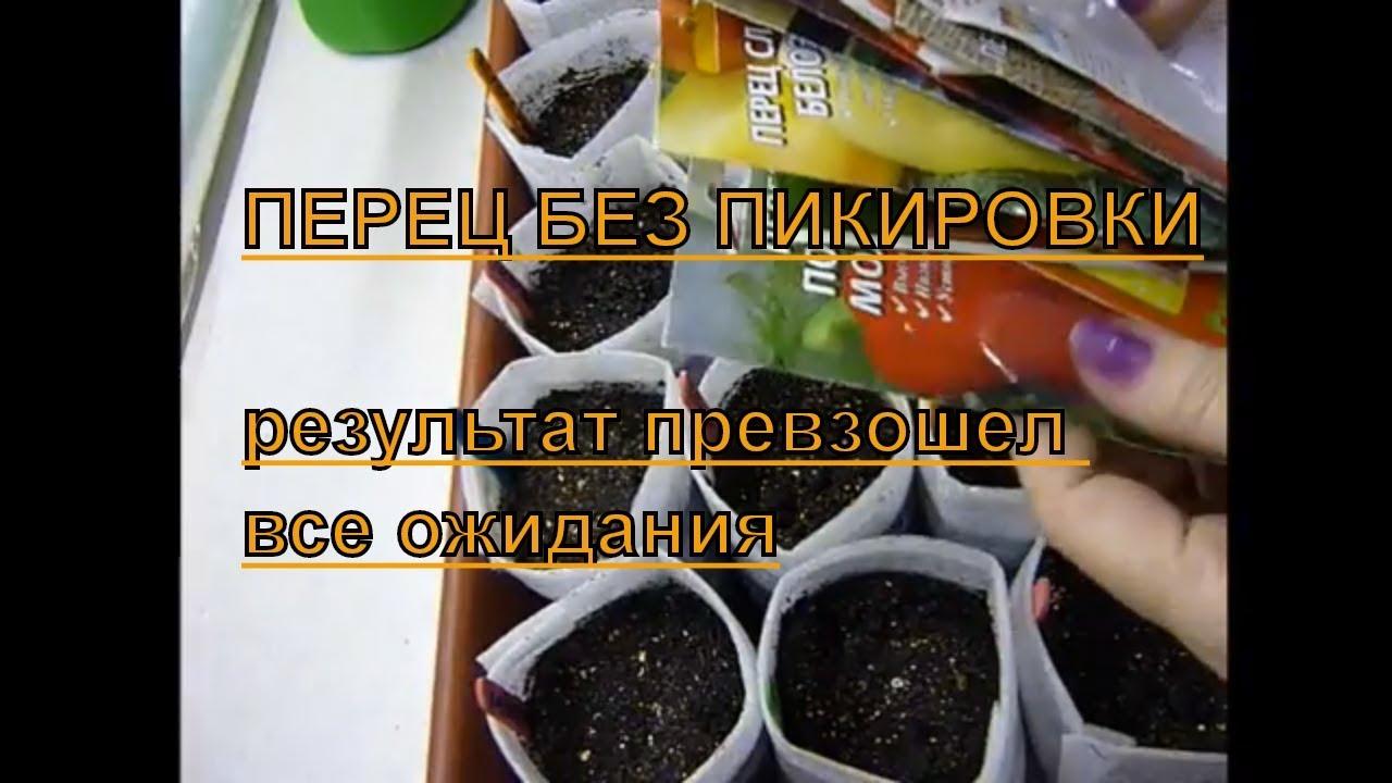 Перец из семян на рассаду