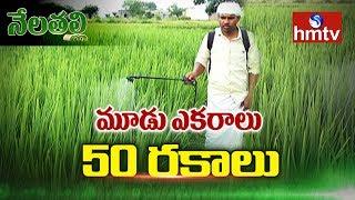మూడు ఎకరాల్లో 50 రకాల వరి సాగు | Success Story Of Janagam Farmer Siddulu | Nela Talli | hmtv