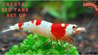 crystal red shrimp tank setup part 1