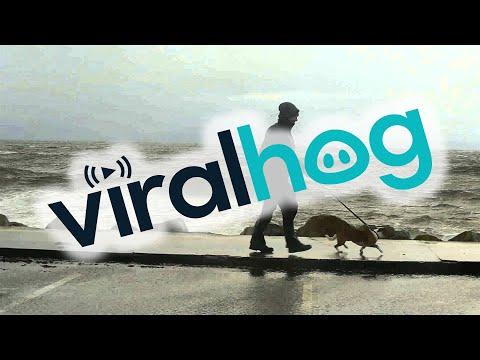 Perro disfrutando del romper de las olas en la costa de Irlanda