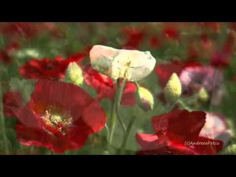 Because I Love You - Giovanni Marradi (romantic, Relaxing Music) video
