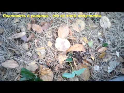 Огород без хлопот - Клубника: Разные способы посадки