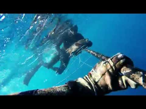 Algeria Spearfishing
