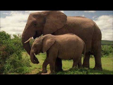 Слон - Звуци на животни (от Логопедико, Пловдив)